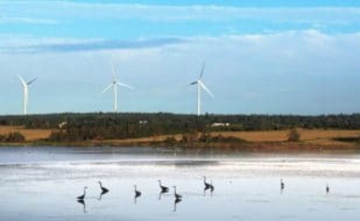 Wind energy industry working to protect birds and bats