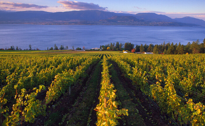 B.C. wineries pulled into pipeline spat say they understand Alberta's frustration, look to tap overseas markets