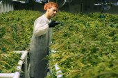 Stoned on an oil rig: Legal weed puts Alberta companies on edge