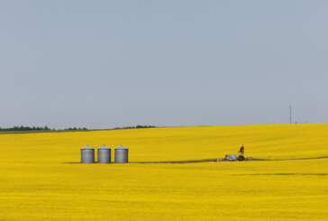 As China spat hits hard, Canada's canola exporters see alternatives in EU biofuel industry