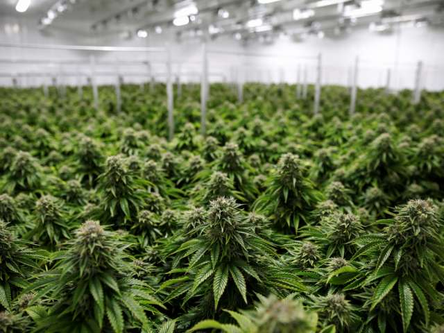 Health Canada numbers have so far shown that cannabis inventory is far outstripping sales figures by a remarkable margin.