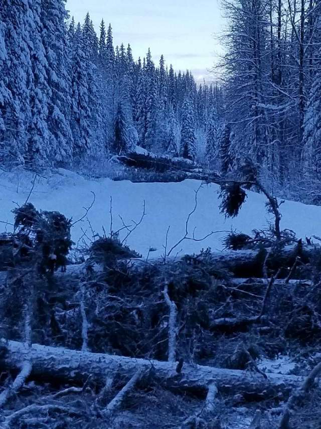 Fallen trees across a roadway are shown in this photo from the RCMP.