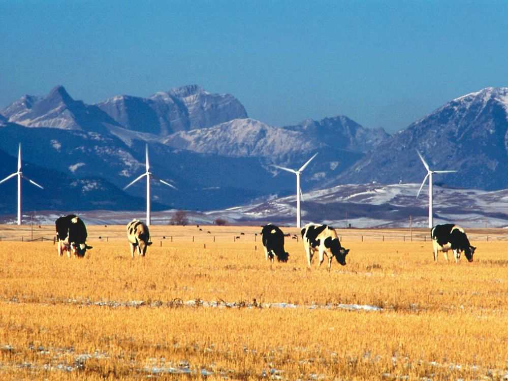 Canada's first wind-energy instalment, built in 1993, is nestled in the Alberta Rockies overlooking Pincher Creek.